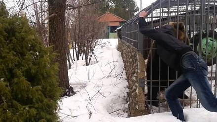 Pijany Rosjanin podchodzi do klatki z niedźwiedziem, żeby go pogłaskać