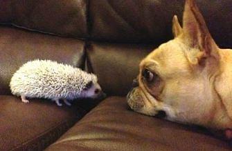 Nagrania psów, które spotykają różne młode zwierzątka