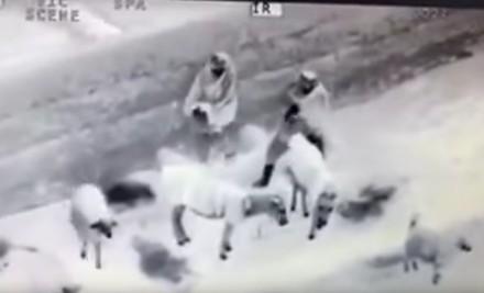 Afgańscy pasterze przyłapani przez drona