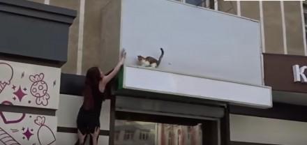 Ściąganie kota z wysokości