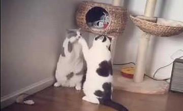 Najbrutalniejsza kocia walka