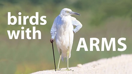 A gdyby ptaki miały ręce...