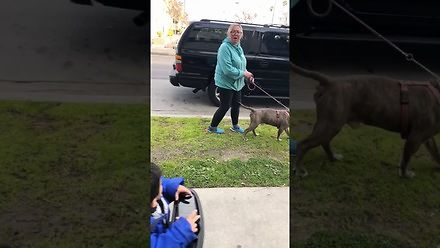 Miała posprzatać po swoim psie. Zwyzywała właściciela domu