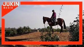 Koń nie jest głupi. Nie będzie się za każdym razem moczył